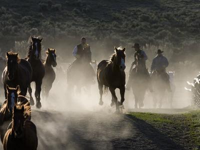 Cowboys Driving Horses at Sombrero Ranch, Craig, Colorado, USA-Carol Walker-Photographic Print