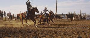 Cowboys Roping a Calf, North Dakota, USA