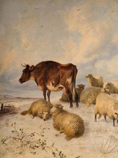 Cows and Sheep in Snowscape, 1864-Thomas Sidney Cooper-Giclee Print