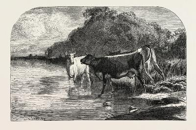 Cows at the Watering Hole, 1855-Constant-emile Troyon-Giclee Print