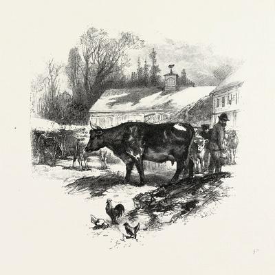 https://imgc.artprintimages.com/img/print/cows-farm-canada-nineteenth-century_u-l-pvh7zc0.jpg?p=0