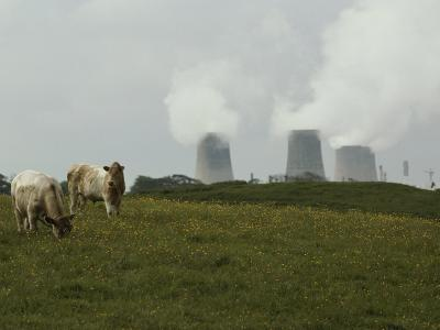 Cows Graze Near a Nuclear Power Plant-Karen Kasmauski-Photographic Print