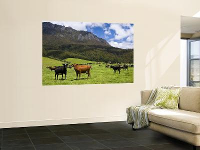 Cows in Lush Pastures and the Rocky Peak of Mt Roland-Glenn Van Der Knijff-Wall Mural