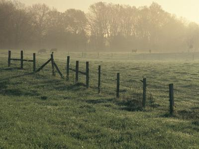 Cows in Morning Mist Along the Natchez Trace, Alabama--Photographic Print