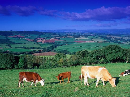 Cows in the Valley, South Wales-Peter Adams-Photographic Print