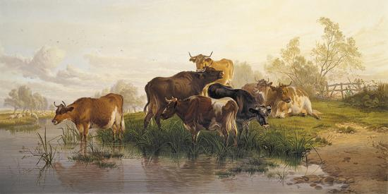 Cows in the Water Meadows-Thomas Cooper-Giclee Print
