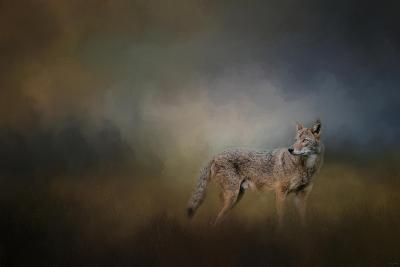 Coyote at Shiloh-Jai Johnson-Giclee Print