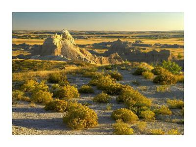 Coyote Bush and eroded features bordering grasslands, Badlands National Park, South Dakota-Tim Fitzharris-Art Print