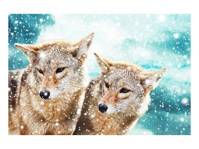 Coyote Pair & Blue Winter Sky--Art Print