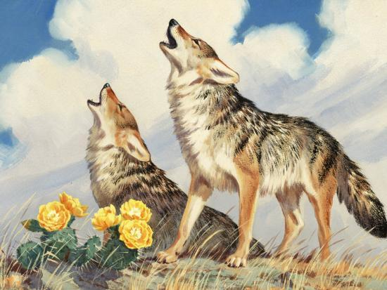 Coyotes Howl to the Setting Sun-Walter Weber-Photographic Print