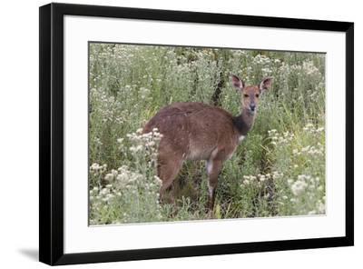 CQ2R6312Bush Buck-Bob Langrish-Framed Giclee Print