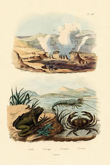 Crab, 1833-39--Giclee Print