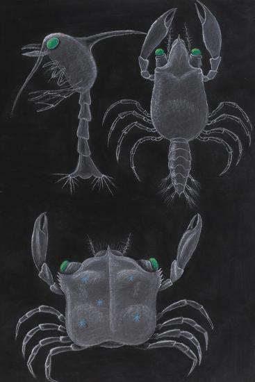Crab Development-Philip Henry Gosse-Giclee Print