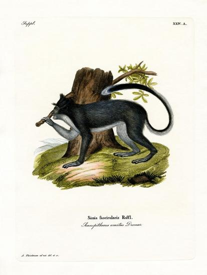 Crab-Eating Macaque--Giclee Print