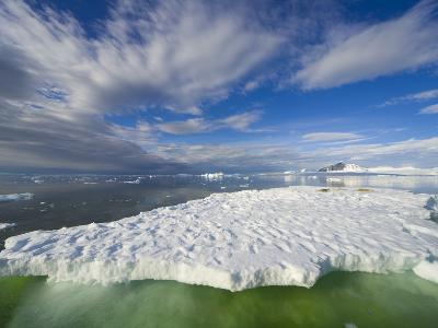Crabeater Seals on Ice Floe at Holtedehl Bay-John Eastcott & Yva Momatiuk-Photographic Print