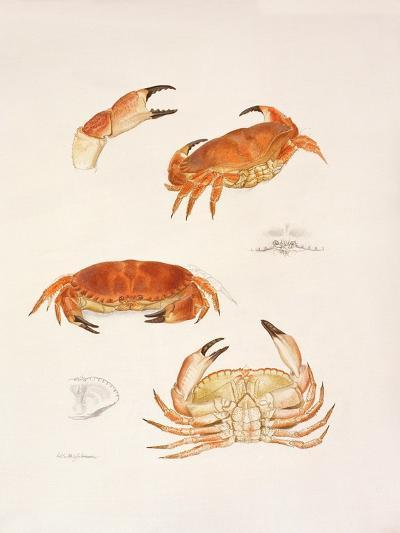 Crabs, 1986-Mary Clare Critchley-Salmonson-Giclee Print