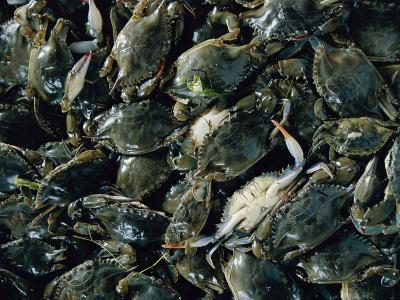 Crabs Caught in the Grasses off Smith Island-Robert Madden-Photographic Print
