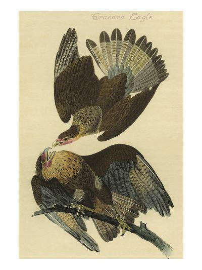 Cracara Eagle-John James Audubon-Art Print