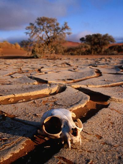 Cracked Mud, Dunes and Monkey Skull in Namib Desert Near Sossusvlei-Karl Lehmann-Photographic Print