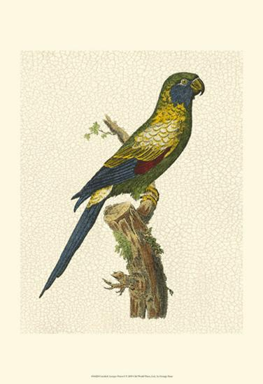 Crackled Antique Parrot I-George Shaw-Art Print
