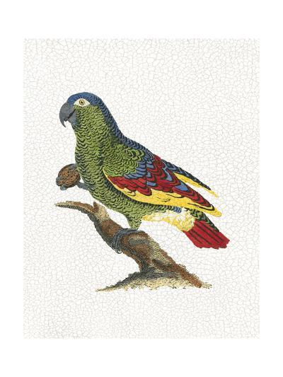 Crackled Antique Parrot II-George Shaw-Art Print