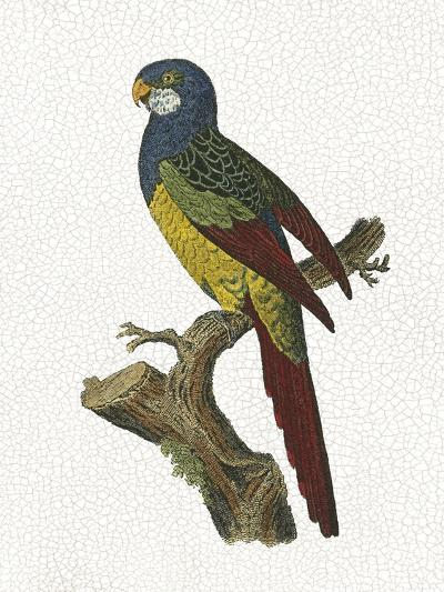 Crackled Antique Parrot IV-George Shaw-Art Print