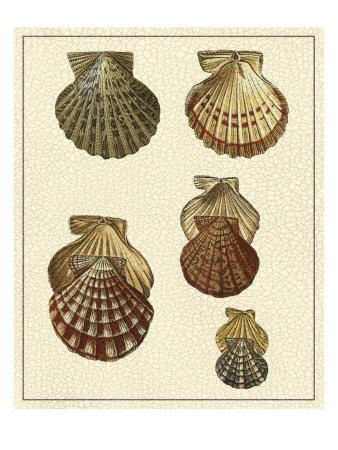 https://imgc.artprintimages.com/img/print/crackled-antique-shells-i_u-l-q11agk50.jpg?p=0