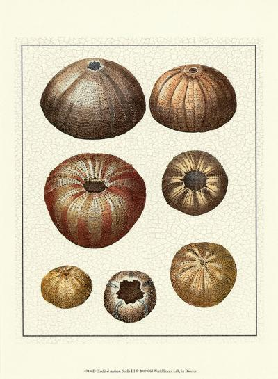 Crackled Antique Shells III-Denis Diderot-Art Print