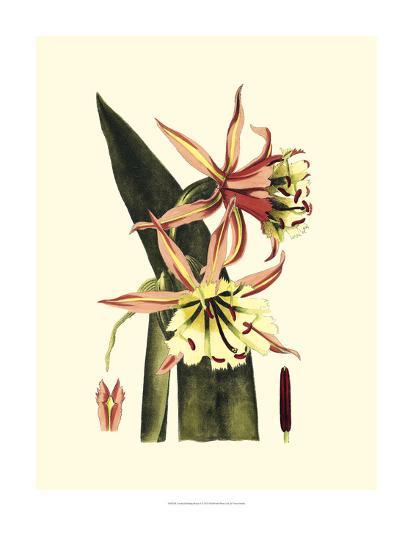 Crackled Striking Beauty I-Vision Studio-Art Print