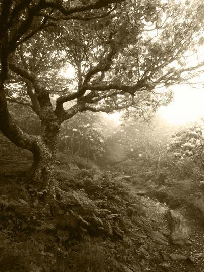 Craggy Gardens, Pisgah National Forest, North Carolina, USA-Adam Jones-Photographic Print