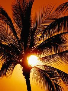 Palm Tree and Sunset by Craig Aurness