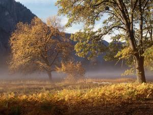 Yosemite Valley in Fall Foliage by Craig Lovell