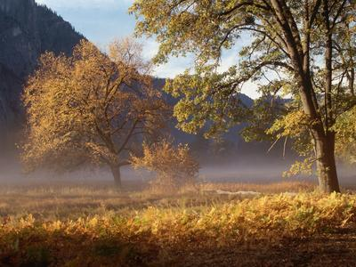 Yosemite Valley in Fall Foliage