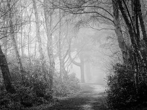 Misty Path in Black and White by Craig Roberts