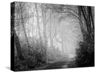 Misty Path in Black and White