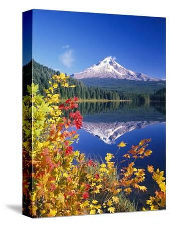 Autumn Leaves Growing Near Mount Hood and Trillium Lake
