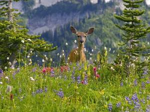Deer in Wildflowers by Craig Tuttle