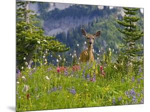 Deer in Wildflowers by Craig Tuttle