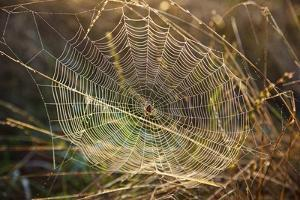 Dew on Spider Web on Mt. Hood by Craig Tuttle