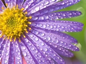 Dewdrops on Flowers by Craig Tuttle