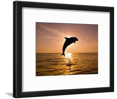 Dolphin Breaching at Sunset