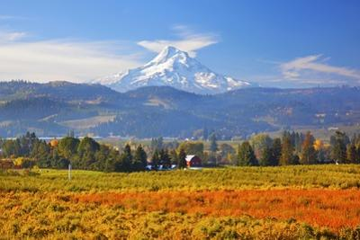 Fall Colors Add Beauty to Hood River Valley and Mt. Hood, Oregon, Pacific Northwest by Craig Tuttle
