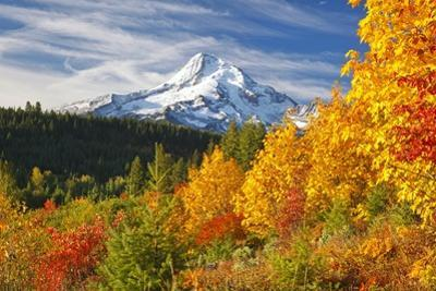 Fall Colors Add Beauty to Mt. Hood, Mt. Hood National Forest, Oregon, by Craig Tuttle