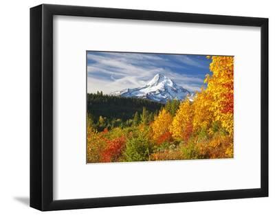 Fall Colors Add Beauty to Mt. Hood, Mt. Hood National Forest, Oregon,
