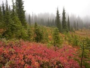Fall Colors and Evergreen Trees in the Fog by Craig Tuttle