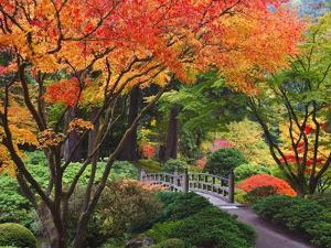 Fall colors at Portland Japanese Gardens, Portland Oregon by Craig Tuttle