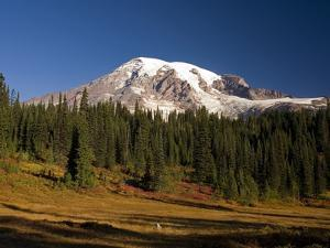 Fall Colors at Sunrise on Mount Rainier by Craig Tuttle