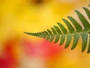 Fern leaf in fall by Craig Tuttle