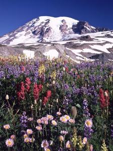 Flowers before Mount Rainier by Craig Tuttle