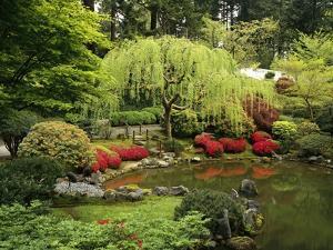 Japanese Garden Pond by Craig Tuttle